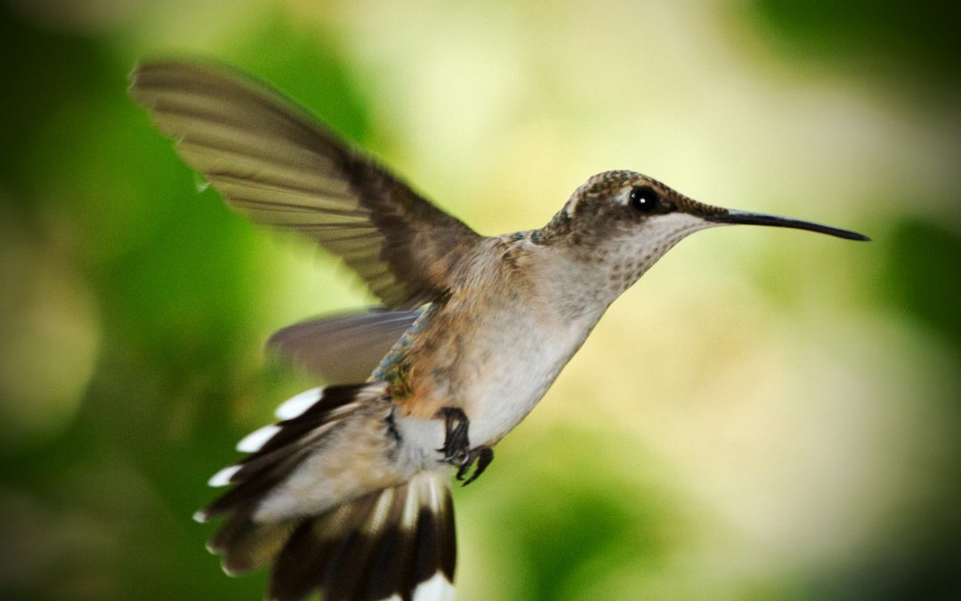 A Lesson from Hummingbirds