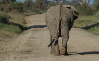 You and the Elephant Could Be Free